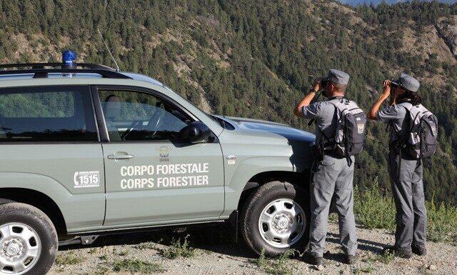Bando Regionale: 580 Assunzioni nel Corpo Forestale e Amministrativo